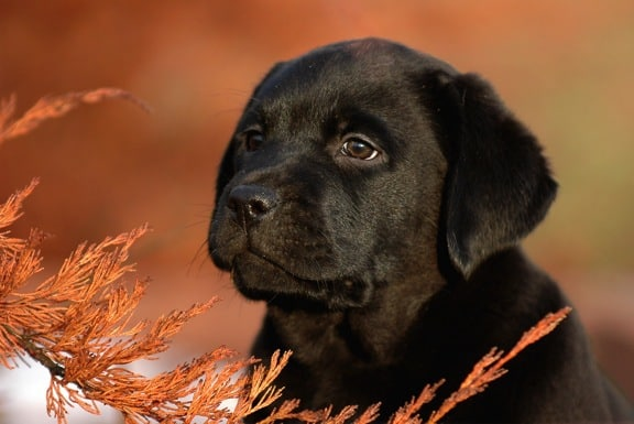 Best Dog Food for Labs (Here are 3 You Can Afford) – Easy