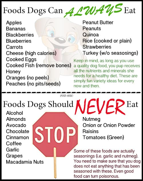 What Food Can Labradors Not Eat Easy