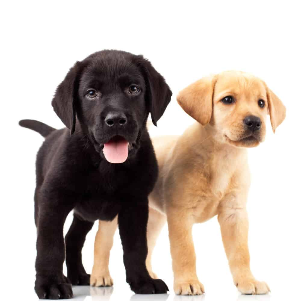 530 Unique and Personal Male Dog Names for 2019 – Easy